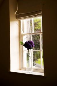 Purple Hydrangea in Window