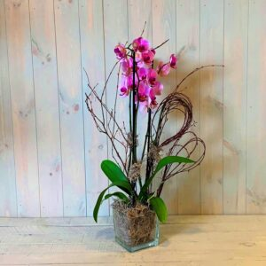 Purple Orchid Plant in Glass Vase. Same day delivery in Dublin city and countyi