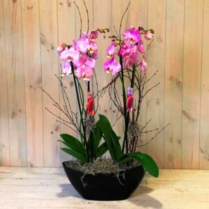 a pair of purple orchid plants with delivery available in Dublint