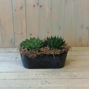 Plant Delivery in Dublin - Succulent Plants in a Container