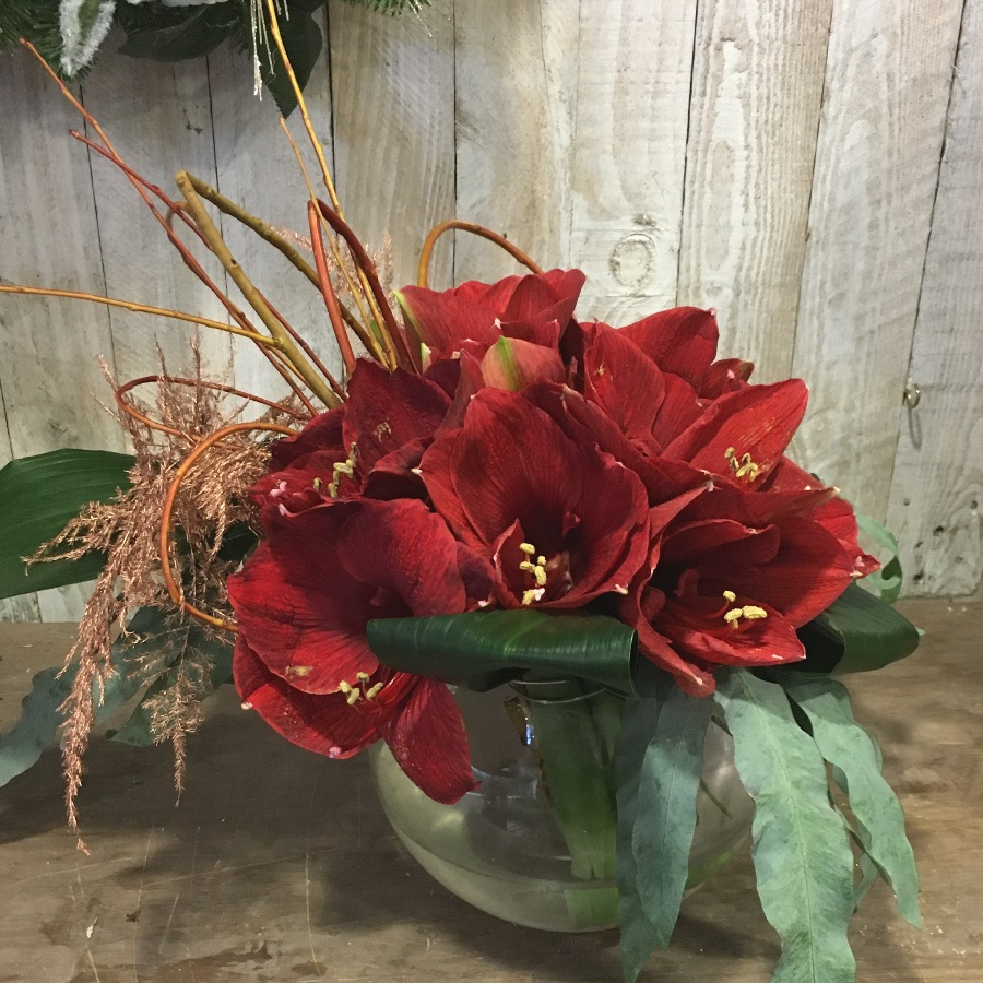 Amaryllis flower arrangement in reds. Seasonal flowers to order to collect or for delivery in Dublin with