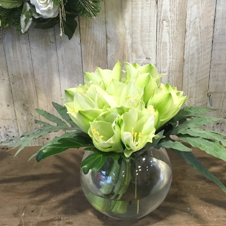 Amaryllis flower arrangement in whites. Seasonal flowers for delivery in Dublin