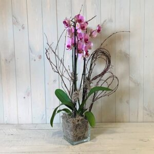 Phalaenopsis Orchid Plant delivered in Dublin as a funeral tributeO